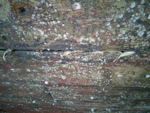 Afrensning af bundmaling på træbåd